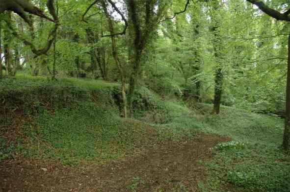 woodland-near-slad