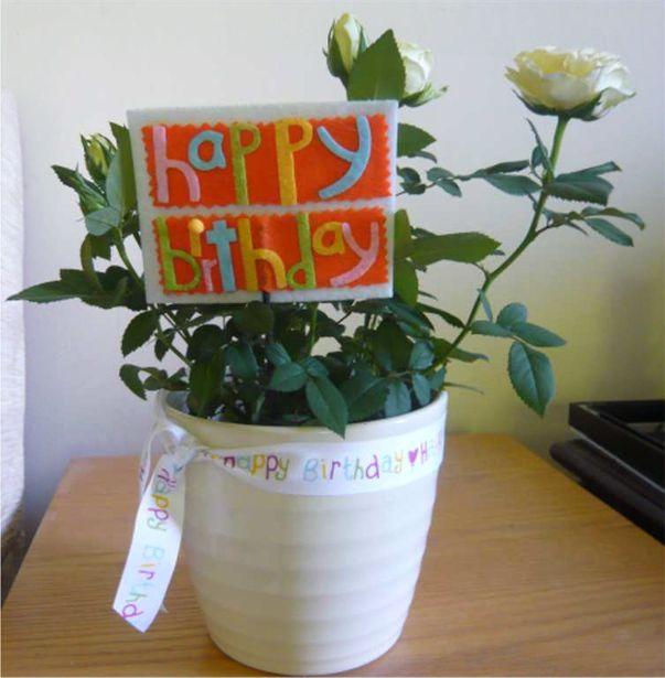Birthday Rose Aug 2013